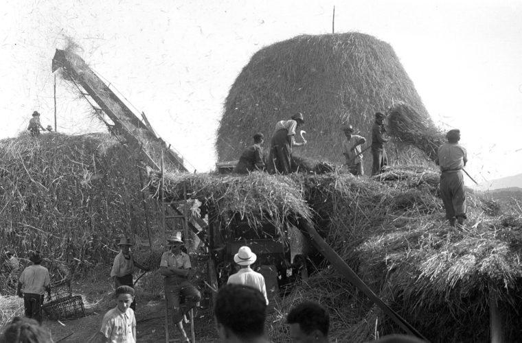 Haksharà di Orciano Pisano, estate 1940 - Archivio CDEC, Fondo fotografico, Anna Levi Sonnino